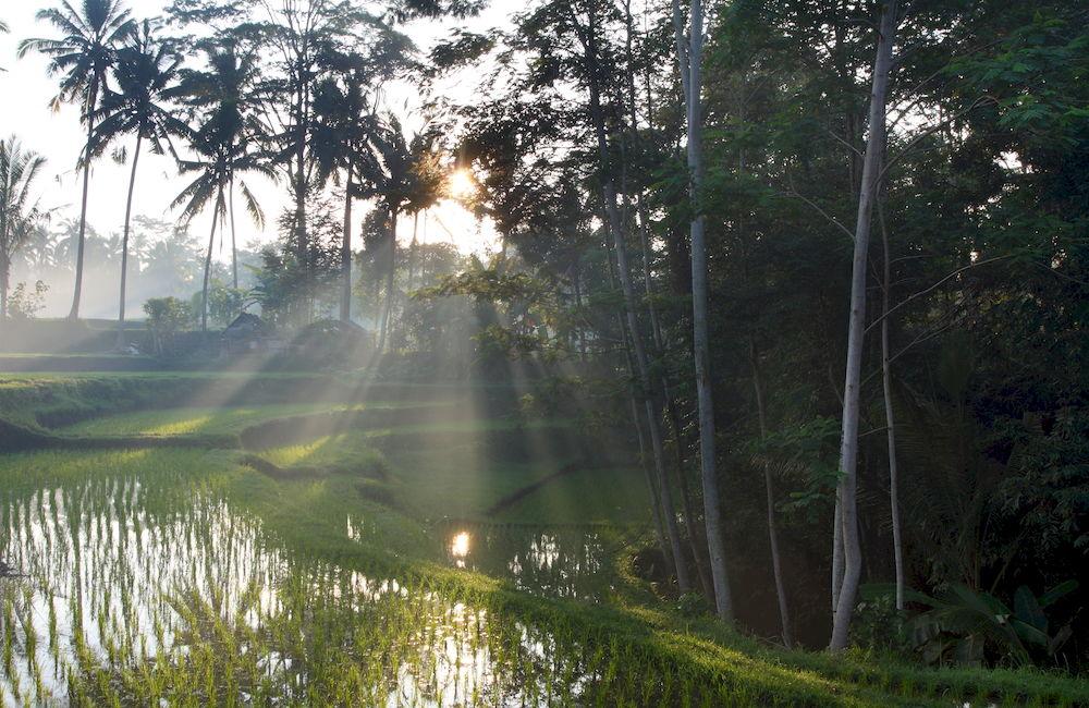 Beingsattvaa Vegetarian Retreat Villa Ubud